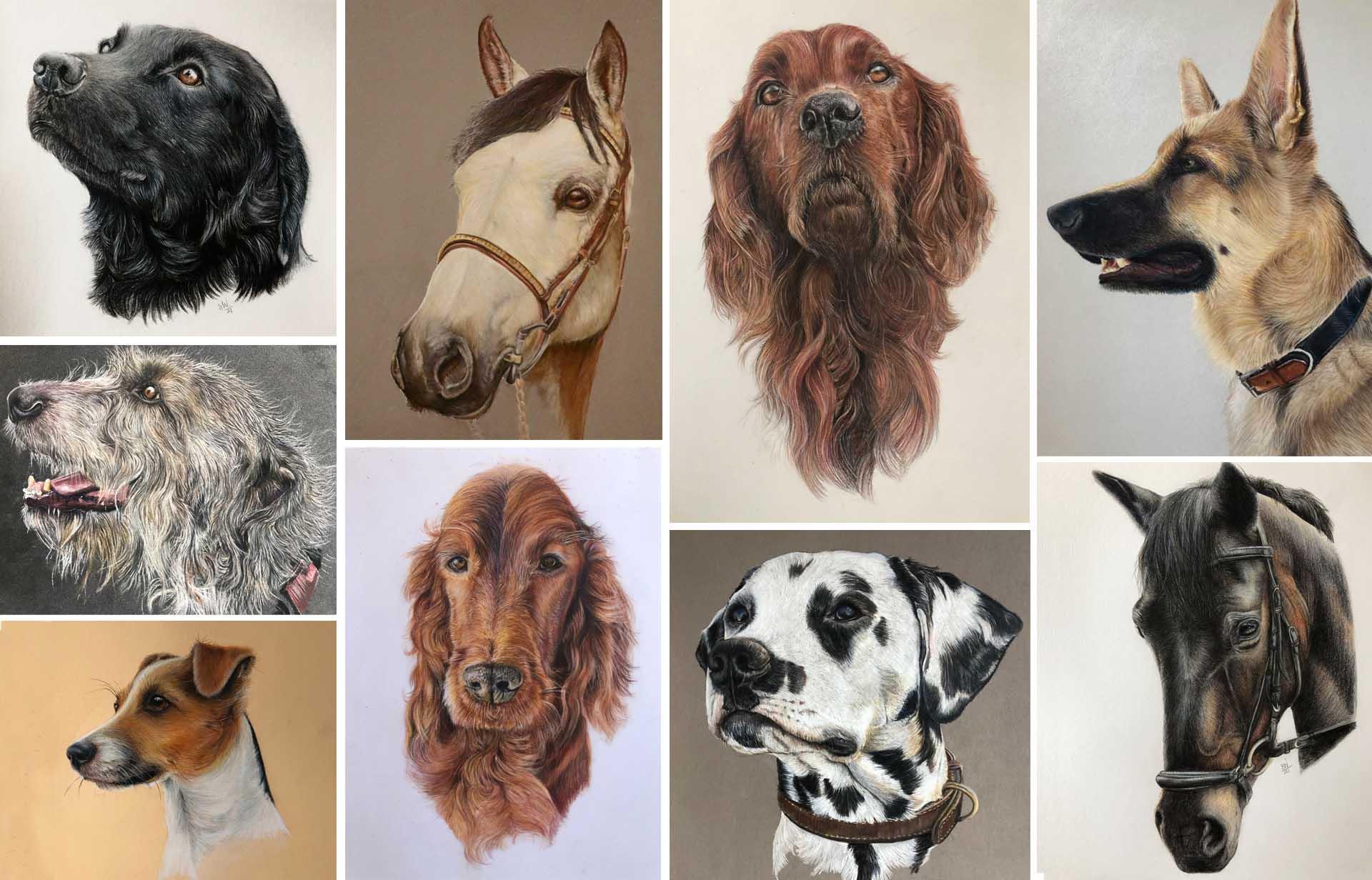 Pet Portraits now available